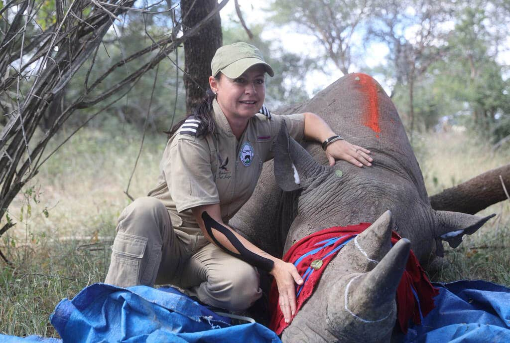 Rhino conservation in South Africa