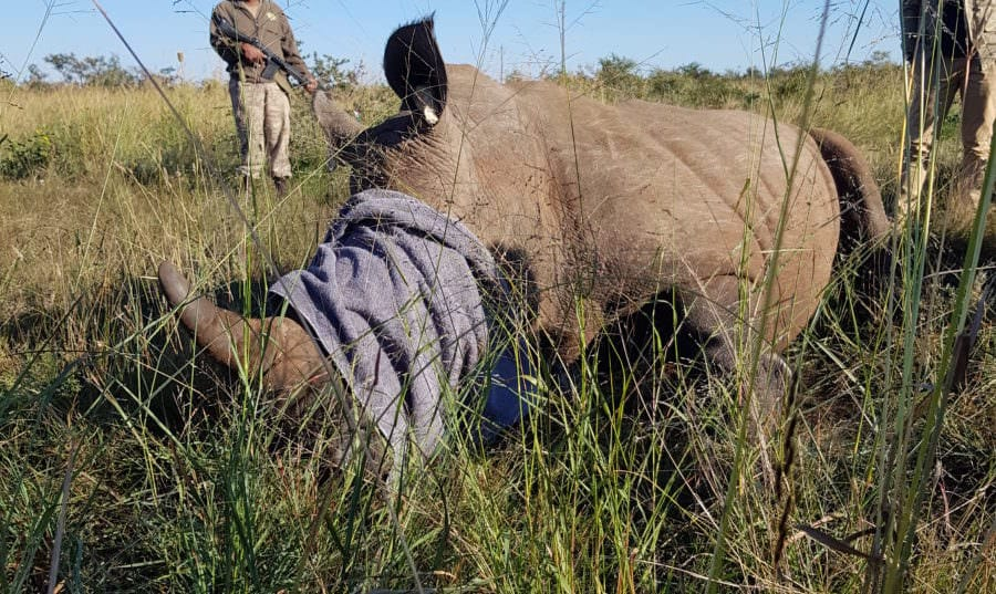 Roaming with Rhino for conservation