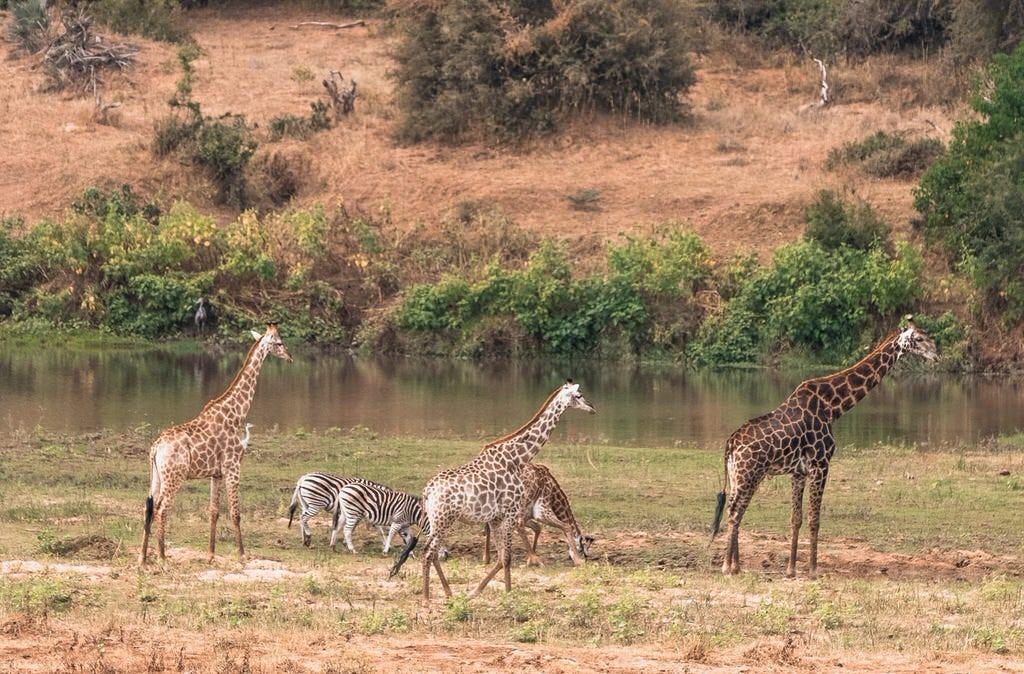 Safari ethically without harming wildlife